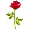 Flower - Rose for her